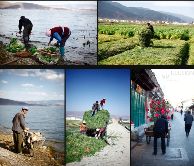 春分收成 spring harvest, Dali Yunnan 雲南大理才村 fishing villages of China