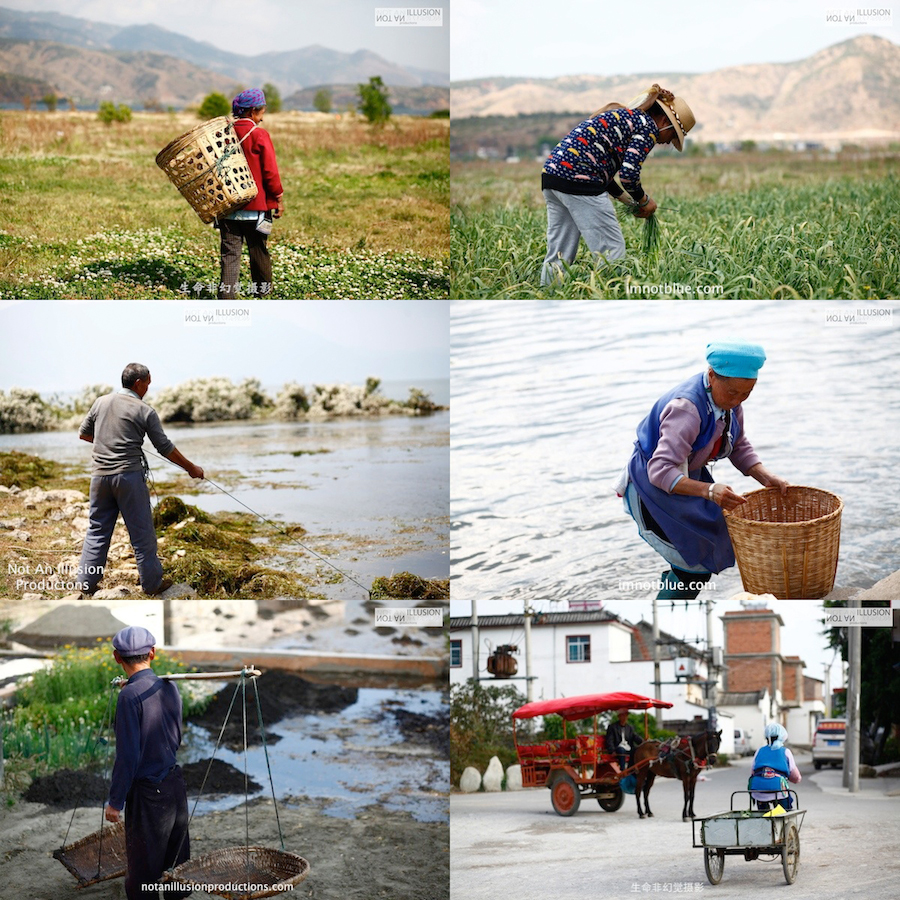 spring harvest, Dali working people in fields, Bai minority 白族文化,大理生活,春分收成,耕種日
