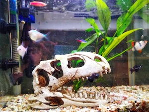 home again fish tank skeleton decoration