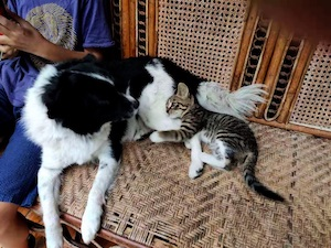 dog & cat living together