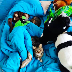 sleeping with stuffed animals cat diary