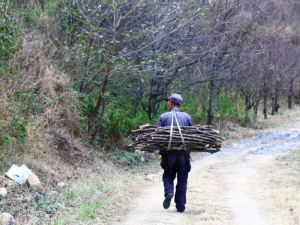 wood stick collector coming back from mountain 大理凤阳邑村子生活