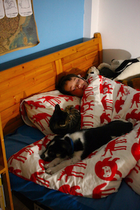 sleeping with pets