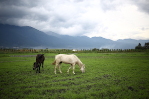 images of china tea & horse trail 大理茶马古道
