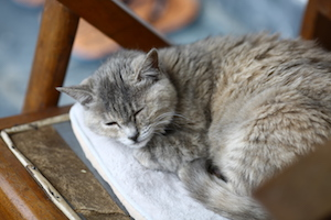 猫小老虎 image of sleeping cat