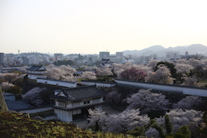 日本樱花季节 Sakura blooming city in Japan